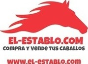 Vende Caballos online