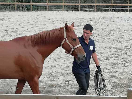 Doma y entrenamiento de caballos