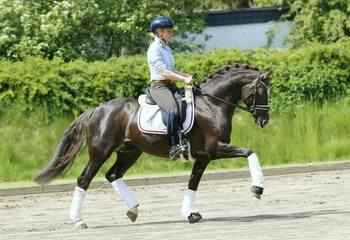 Pony multi talentoso / disciplinado