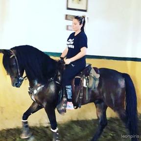 caballo capado cruzado y con mucha clase