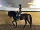 caballo capado cruzado y con mucha clase en venta en España