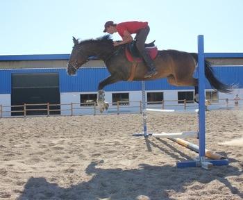 Vendo Yegua KWPN de salto