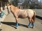 Ponis Pony Club en venta en España