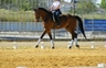Se vende caballo CDE en venta