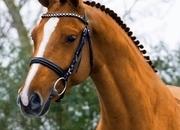 Busco caballo de doma clásica en cesión