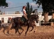 Busco trabajo con caballos (guía de rutas, cuidador...)