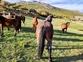 Caballos Enteros en venta en España