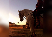 Busco cederme un buen caballo para salto y doma