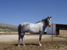 Vendo mi caballo