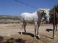 Vendo mi yegua en venta en España