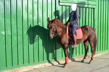 Se vende caballo anglo árabe