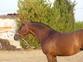 Se vende yegua en venta en España