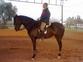 Doma de caballos  en venta