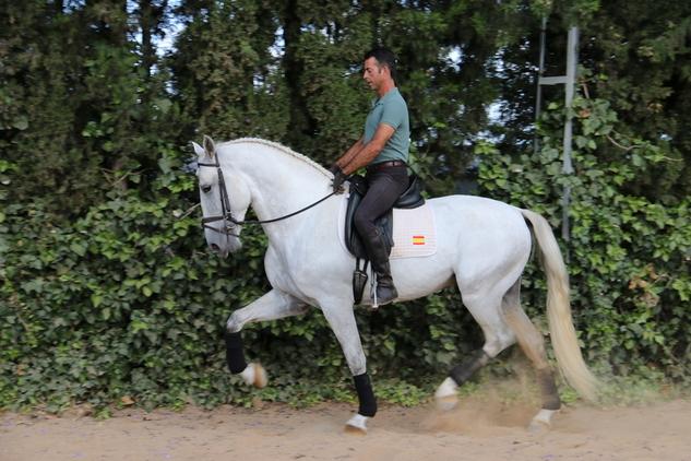 caballo de doma