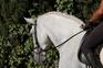 caballo de doma  en venta en España