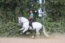 caballo de doma  en venta