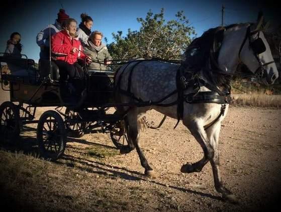 Se vende caballo español