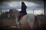 Se vende caballo español  en venta en España