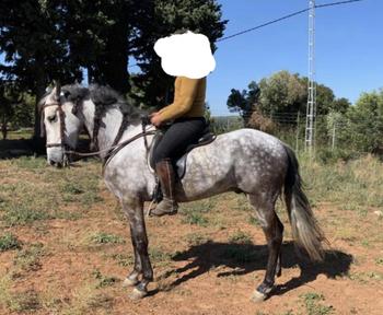 Se vende caballo pre