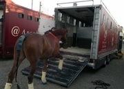 Venta de camiones de caballos