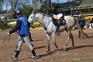 Caballos árabes (PRá) clasificados en 40, 60, 80, 80* y CEI*