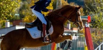 Se vende caballo de salto