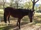 Vendo caballo de 3 años y medio