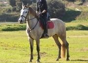 Cedo caballo en el Maresme