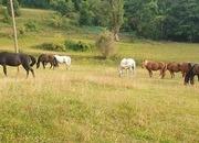 Busco clases particulares de equitación y doma natural