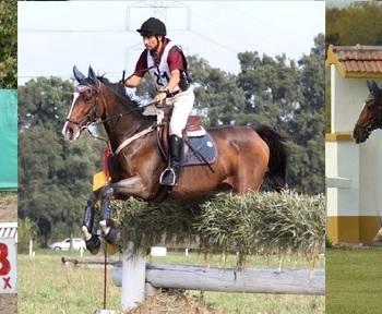 Tecnico en  Equitación especialidad Concurso Completo y Salto