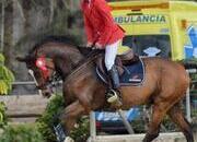 Se vende espectacular caballo para saltar 1'40 y 1'50
