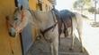 Quarter horse caballo en venta