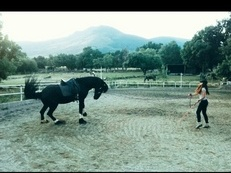 Entreno caballos , doma natural