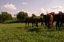 Empleo y Trabajo con caballos en venta