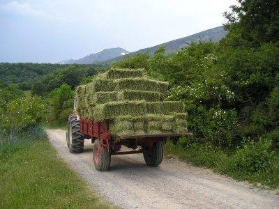 hierba,heno de alta montaña,gran calidad,en pacas pequeñas