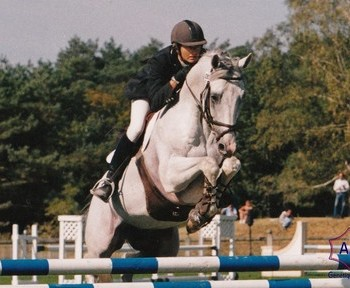 A performer and timeless stallion to cover your mare