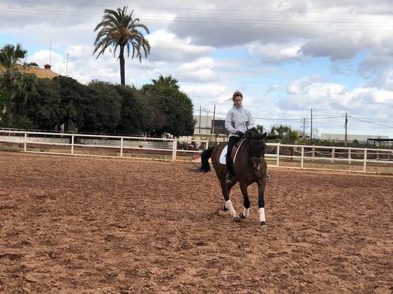Caballo Yeguada Paco Ballester (PRE) Castrado en Valencia