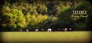 Tatanca Rutas a caballo por la Garrotxa en venta