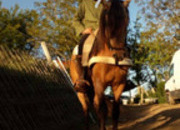 Se vende precioso caballo hispanoarabe