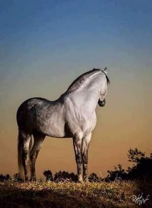 Jinete para montar sus caballos y tenerlos en forma