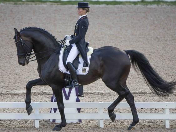Jinete, profesor equitación