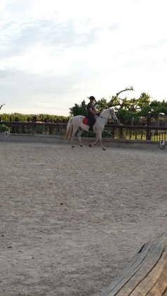 Vendo caballo joven