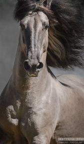 Venta de caballos, Potros, Puros y Cruzado