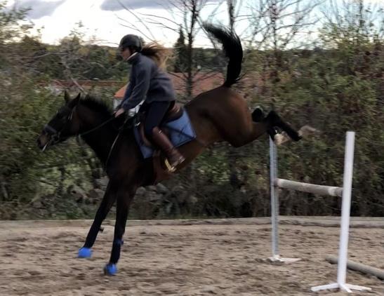 Yegua joven salto
