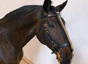 Cabezadas para caballo Caballero del Lazypony