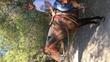 Yegua Quarter Horse con documentación  en venta en España