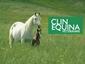 CLINEQUINA veterinari